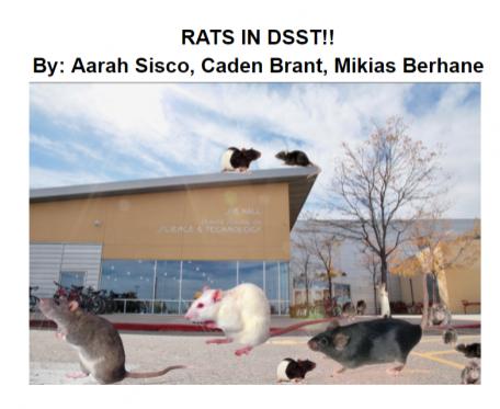 Rats in DSST!!